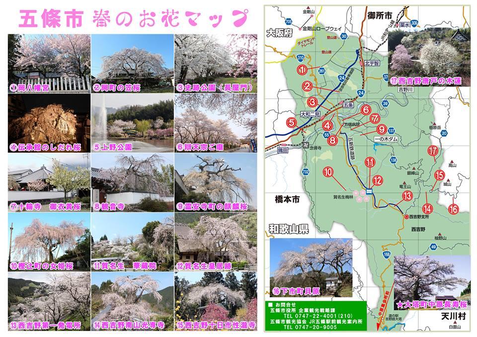 五條市の桜情報   吉野大峯高野観光圏