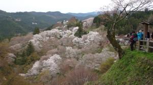 140407_吉野山1
