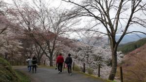 140407_吉野山2